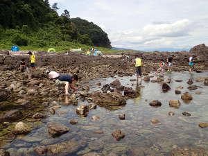 磯遊び(13):8月中旬の磯 真鶴半島 三ツ石海岸