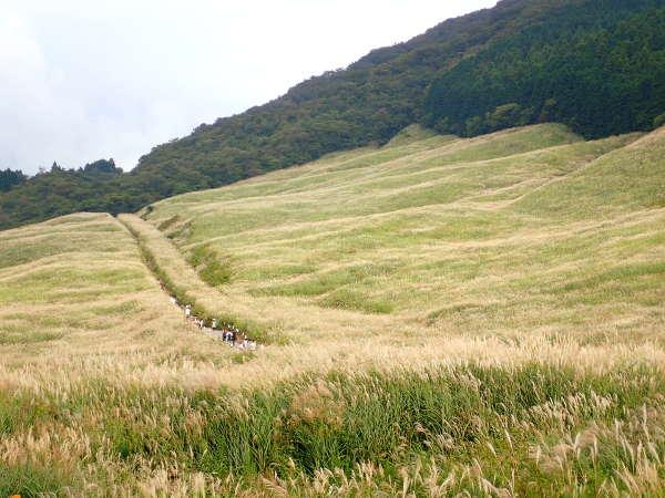 「仙石原 すすき」の画像検索結果